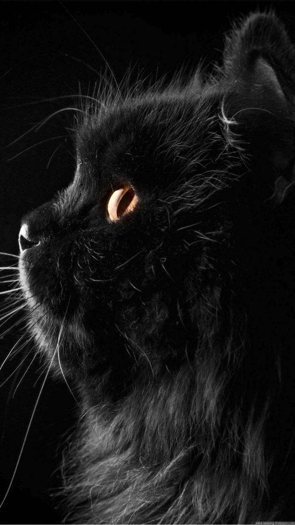 1078994 cute black wallpapers 1080x1920 hd for mobile 576x1024 - 40 Fondos de pantalla Oscuros