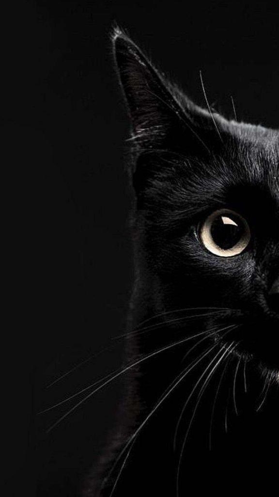 12463 black cat wallpapers 36970 wallpaper iphone 576x1024 - 40 Fondos de pantalla Oscuros