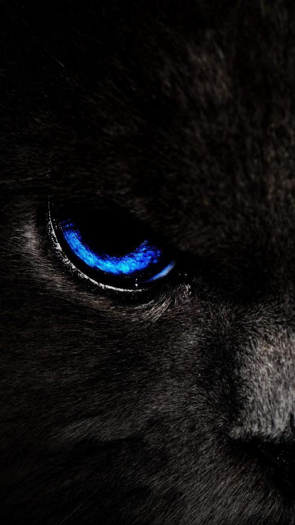 cat eyes blue 143433 1080x1920 576x1024 - 27 Fondos de Pantalla Negros para ahorrar bateria