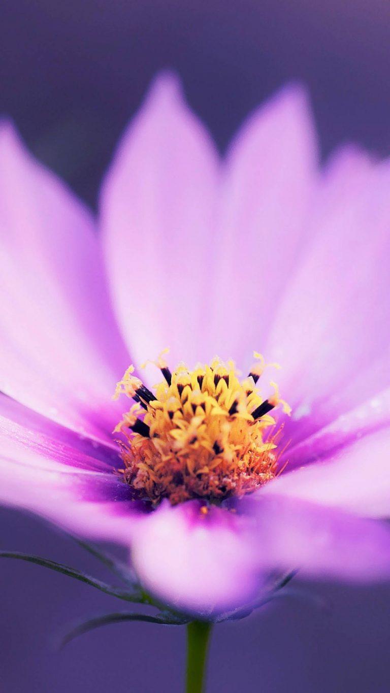macro pink flower r0 1080x1920 1 768x1365 - +84 Fondos de Pantallas femeninos (para chicas)