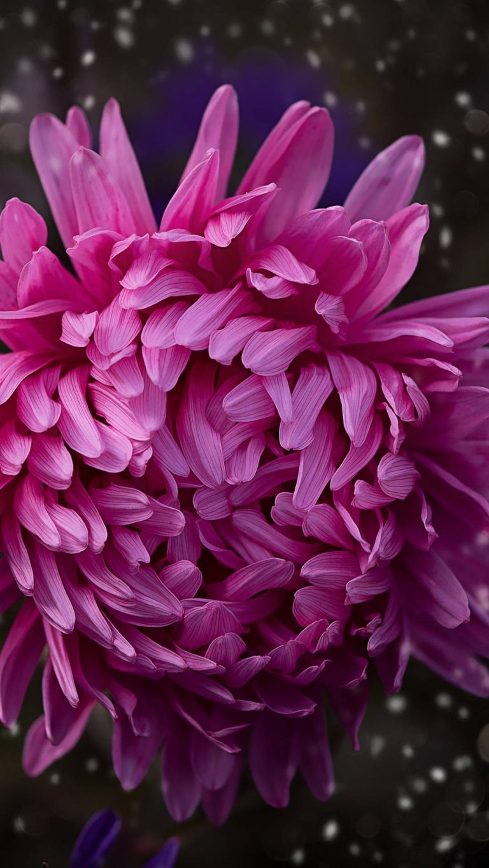 pink color flower bokeh 3e 1080x1920 1 768x1365 - +84 Fondos de Pantallas femeninos (para chicas)