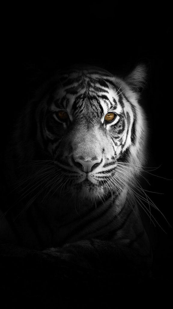 tiger big cat predator 138698 1080x1920 576x1024 - 27 Fondos de Pantalla Negros para ahorrar bateria